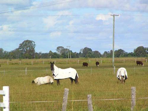 Лошади куклус-клана :) Не буду вас вводить в заблуждение, это накидки от жары :)